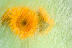 A Brush with Sunflowers
